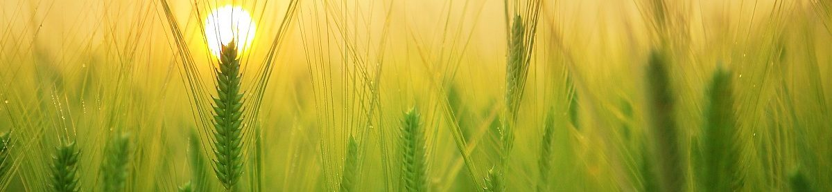 cropped-barley-field.jpg