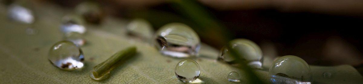 cropped-raindrops-14.jpg