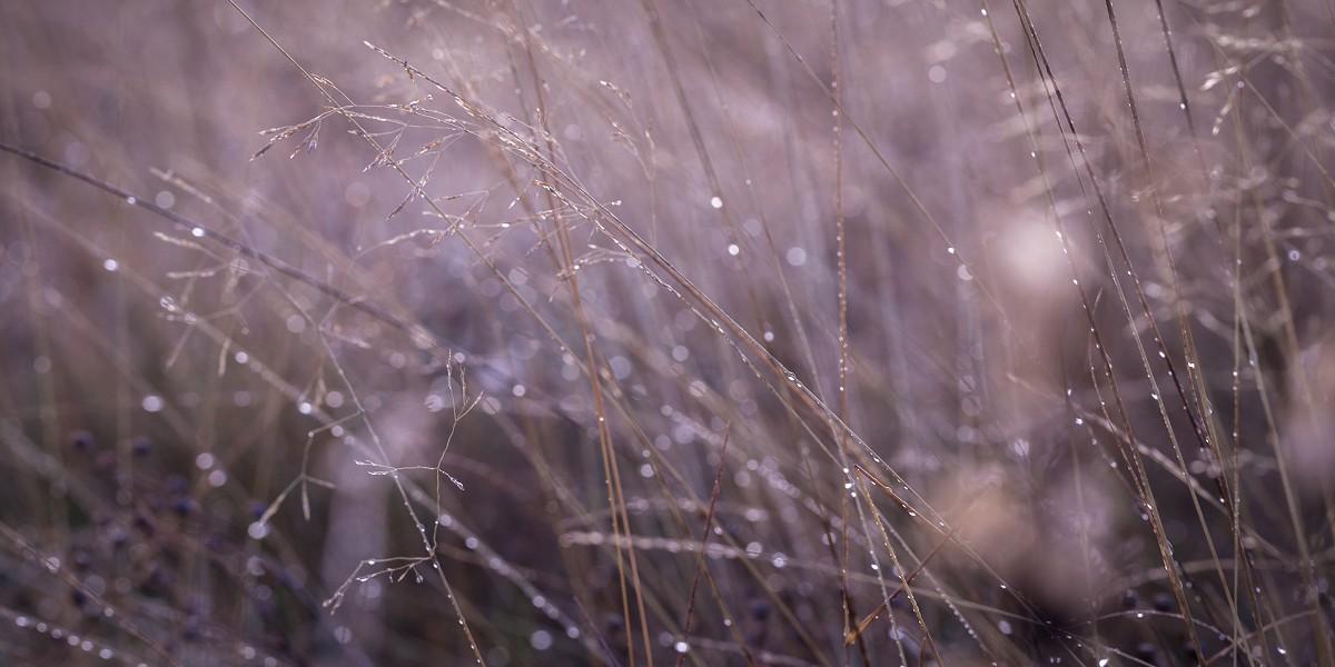 grass-rain